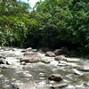 Daintree Wilderness Tour 488