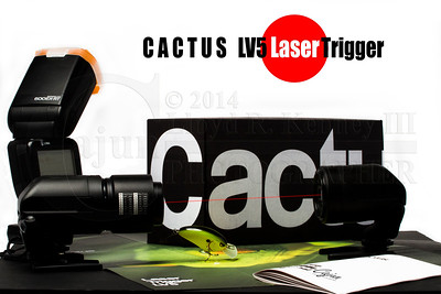 The Cactus LV5 Laser Trigger - A W E S O M E effecr trigger. Thanks Santa!!   I had my new boom holding a Paul C Paul C. Buff Professional Photographic Strobes Einstein 640 with a beauty dish attached. I used my Canon 7D and one Canon 600 Speedlight. I used a set of Phottix wireless triggers to to transmit the signal from the Cactus to the Canon 7D. I mounted the speedlight to the Phottix Transmitter and used it to light the background. I gelled the speedlight with the Canon Dunkel-Orange-Filter SCF-E10R2 to warm the background.   Canon EOS 7D  Canon EF100-400mm f/4.5-5.6L IS USM  Paul Buff Einstein 640 set to 1/4 power in Color Mode.  The Cactus LV5 Laser Trigger - A W E S O M E effecr trigger. Thanks Santa!!   Photography By: Lloyd R. Kenney III © 2013 All Rights Reserved Email: LloydKenneyiii@gmail.com