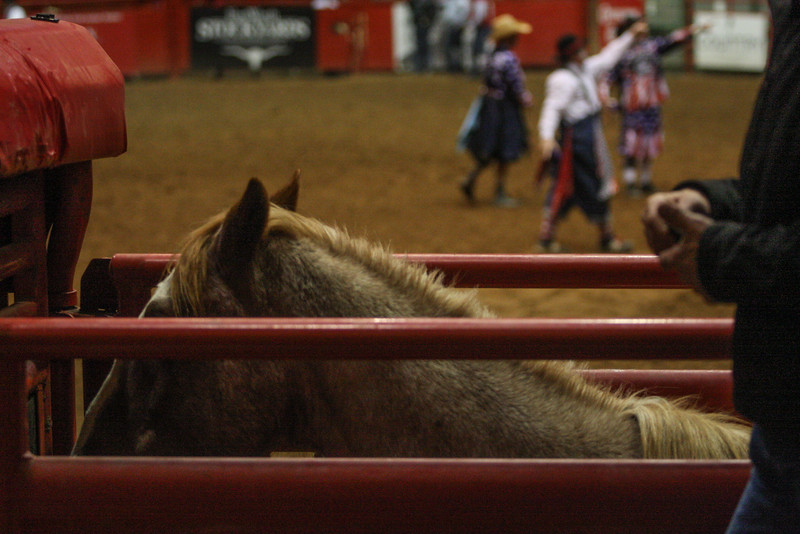 Who will win, the horse or the man just before the gate opens in bronc riding at the Ft. Worth cowtown rodeo July 3, 2015.