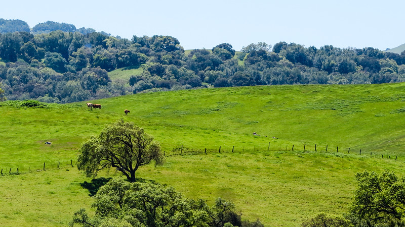 Marin County hills