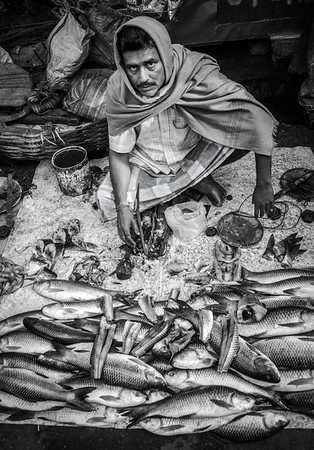 "THE ""KING"" FISHER, KOLKATA, INDIA, 2014."