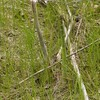 _5200088 crop sharpen asparagus