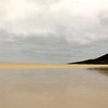 Tawny Tide