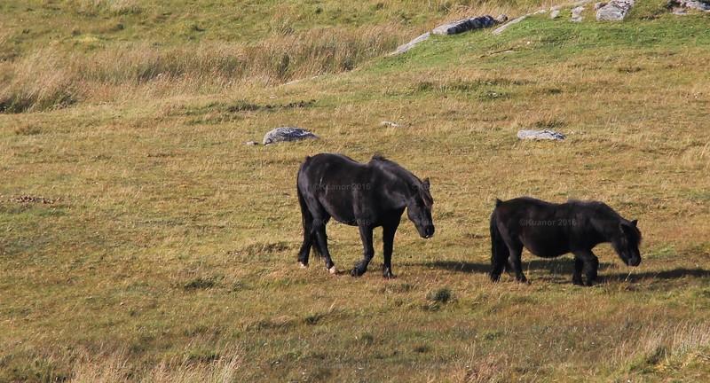 Gentle Ponies