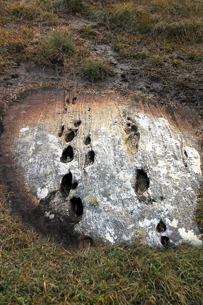 Cloven footprints?