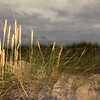 Sunlight Grass, Shadowed Sky