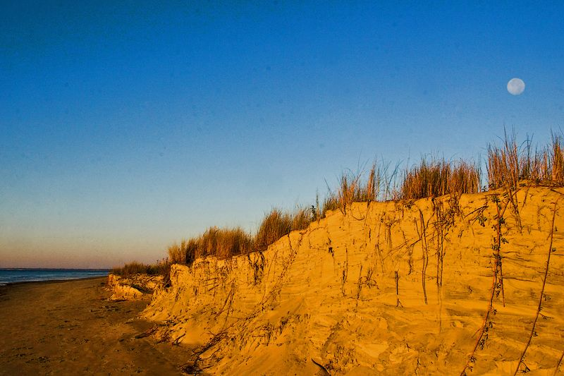 morning sun on the sullivan's island dunes above which the moon is just setting.