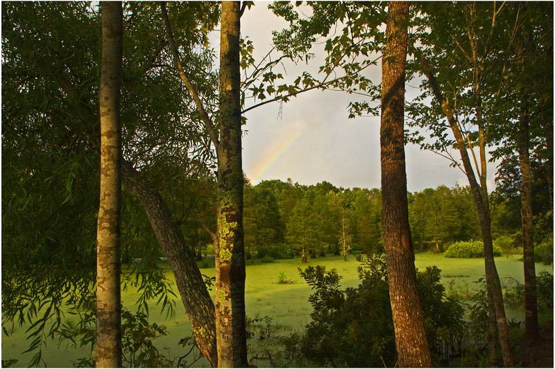 Rainbow seen through trees at Magnolia Gardens Rookery