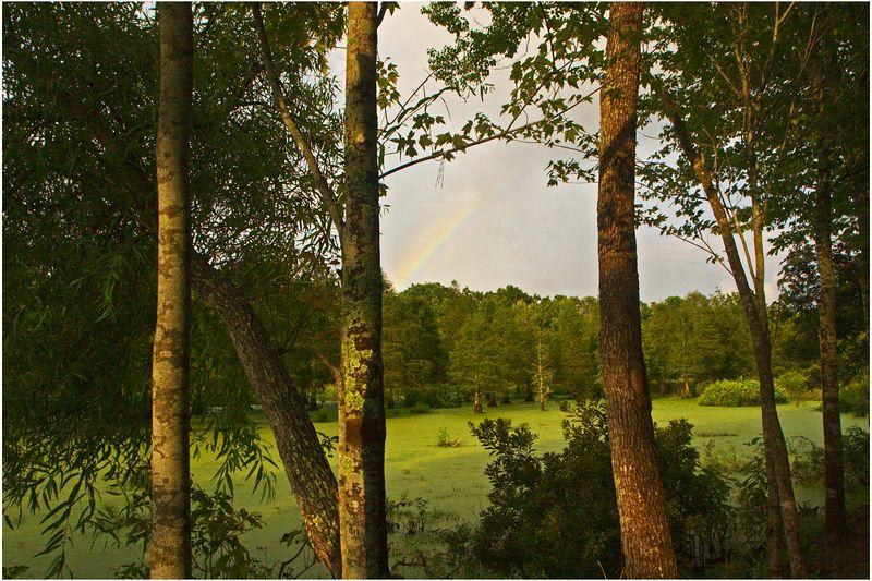 Rainbow seen through trees at Magnolia Gardens Rookery