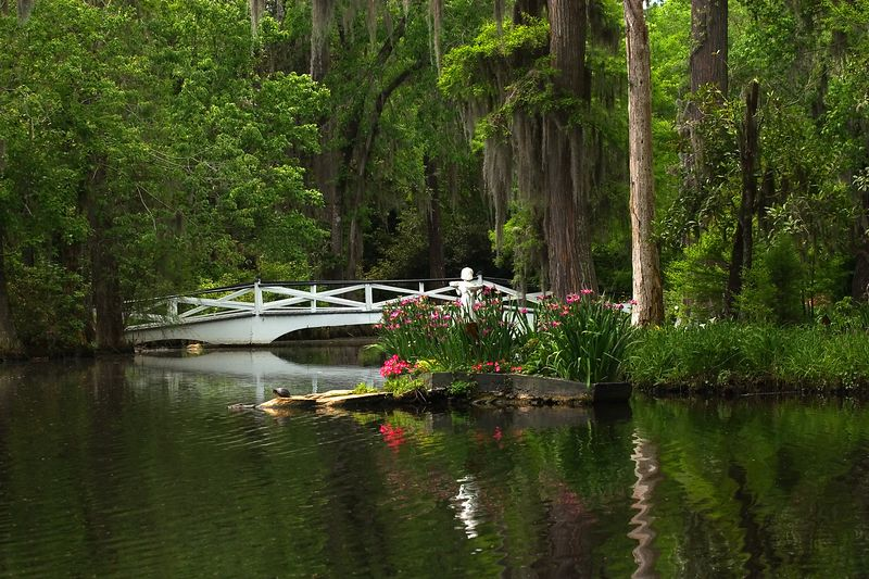 The gator and the turtle in the calm of a southern spring........
