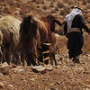 A shepherd tends his flock outside Jerusalem. (Kevork Nalbandian)