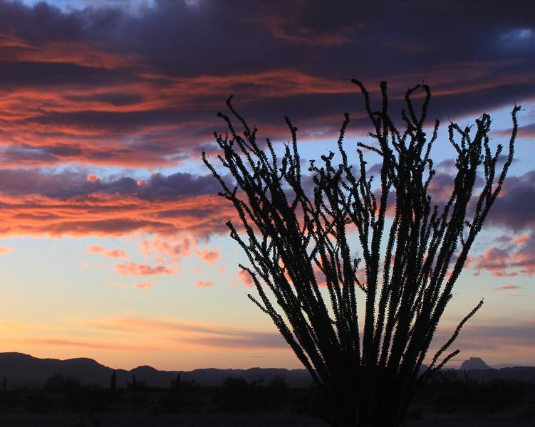 Ocotillo Sunset, Yuma  AZ
