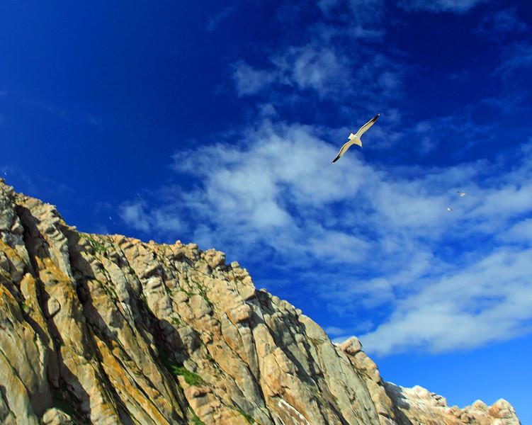 Morro Rock and seagull
