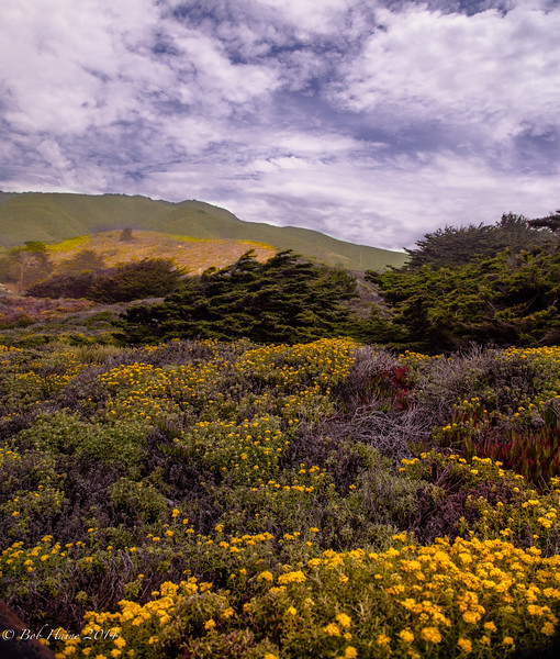Wildflowers, Highway One
