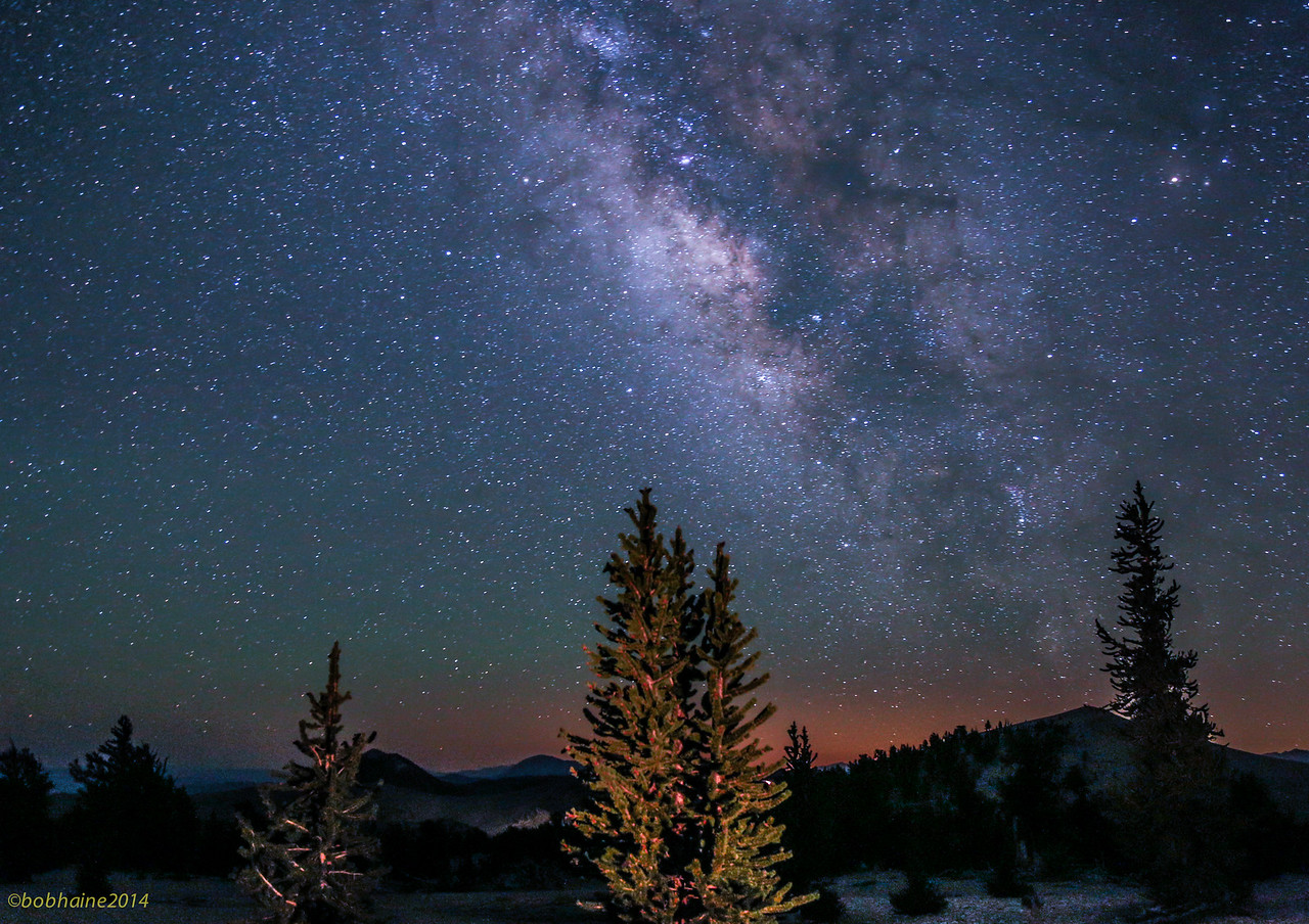 Bristlecone Pines and the Milky Way