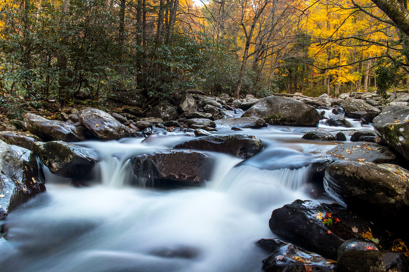 Dancing with the Colors in the Great Smoky Mountains