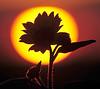 Sunrise, Roxborough
