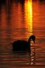 Sunrise, Centennial Lake