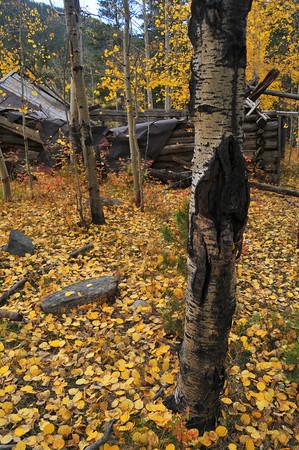 Fall Color at Fossile Ridge