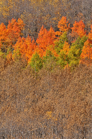 Varying stages of color change and leaf loss high above Monarch Park