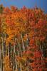Spectacular autumn color near Arrowhead