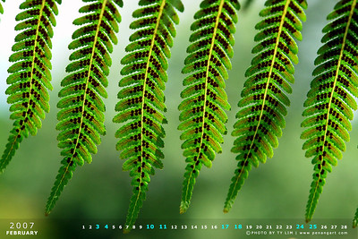 Nature Calendar Wallpaper 2007