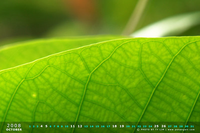 Nature Calendar Wallpaper 2008