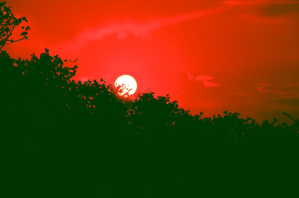 Isle of palms sunset