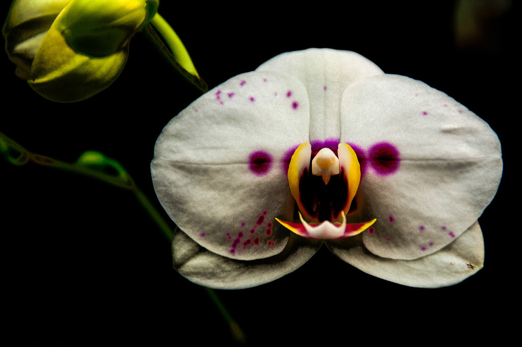ugly orchid