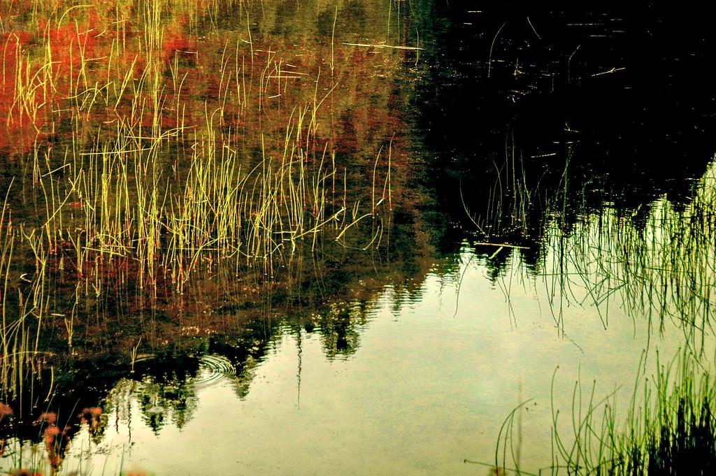 dusk on the Swan