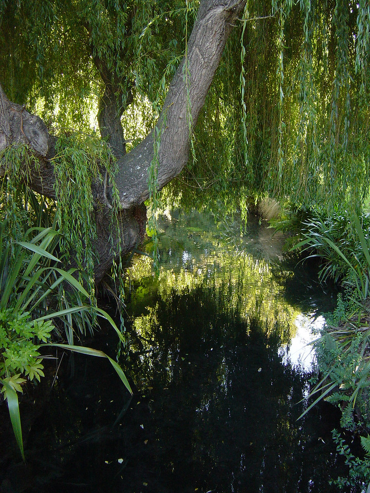GARDEN STREAM, CHRISTCHURCH, NEW ZEALAND