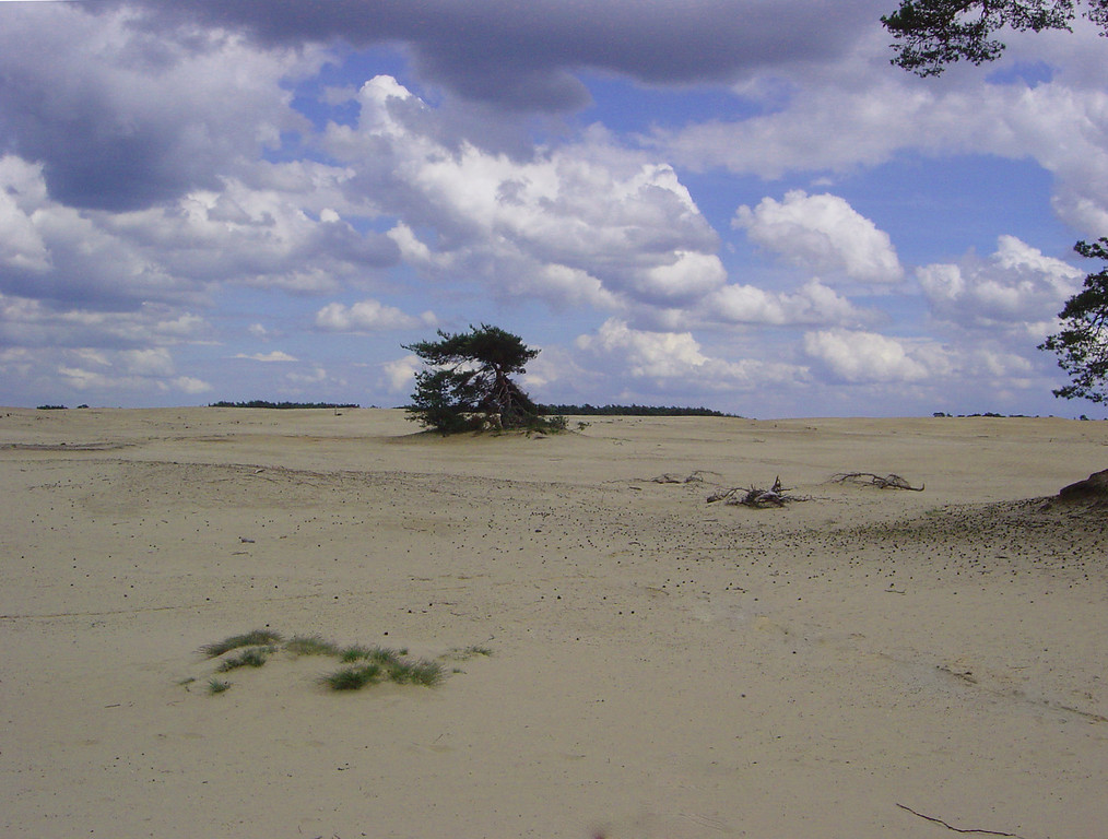 THE BEACHES OF HOLLAND