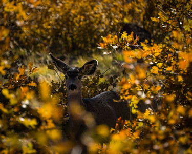 Deer in the Fall