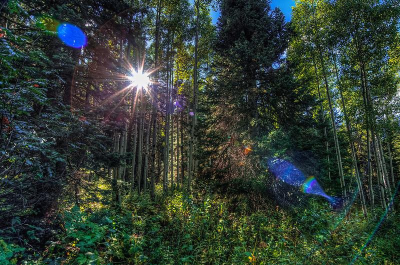 Shining through the Trees