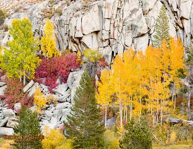 Colorful Fall Scene On A Cliff Near South Lake