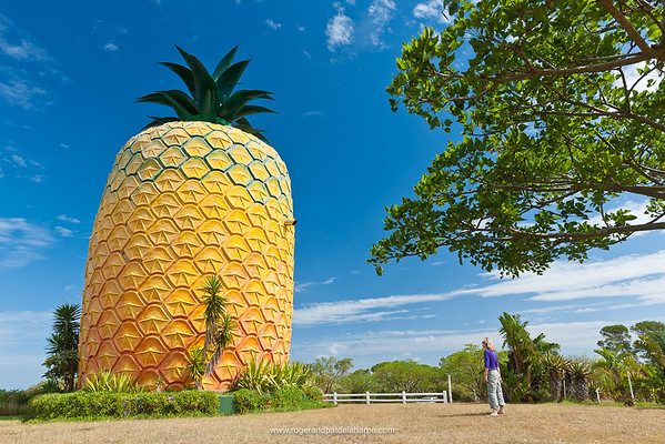The Big (Giant) Pineapple. Bathurst. Eastern Cape. South Africa. It stands 16.7m high and has 3 floors. It is constructed out of a fibreglass outer skin covering a steel and concrete superstructure