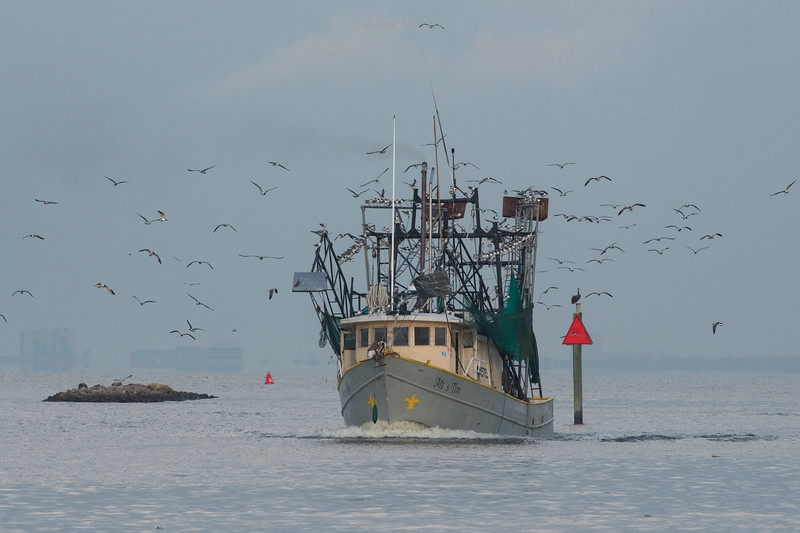 Boats-MrsTin0716