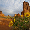 Photo by Walt Hester<br /> Wildflowers bloom in late May from the red sand of Arches National Park near Moab, Utah. Though the area sees little moisture throughout the year, rain and ice are the sculptures of the stunning landscape.