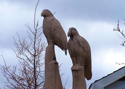 Birds in Nova Scotia