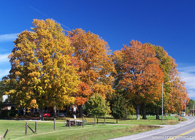 Autumn Trees, Ontario