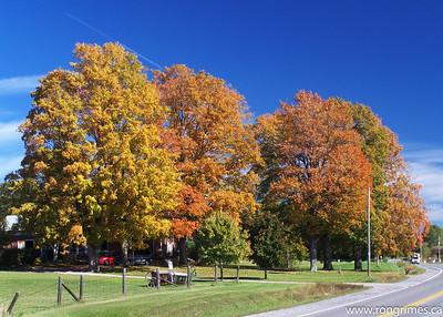 Autumn Trees, Ontario