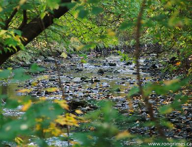 A Toronto Brook