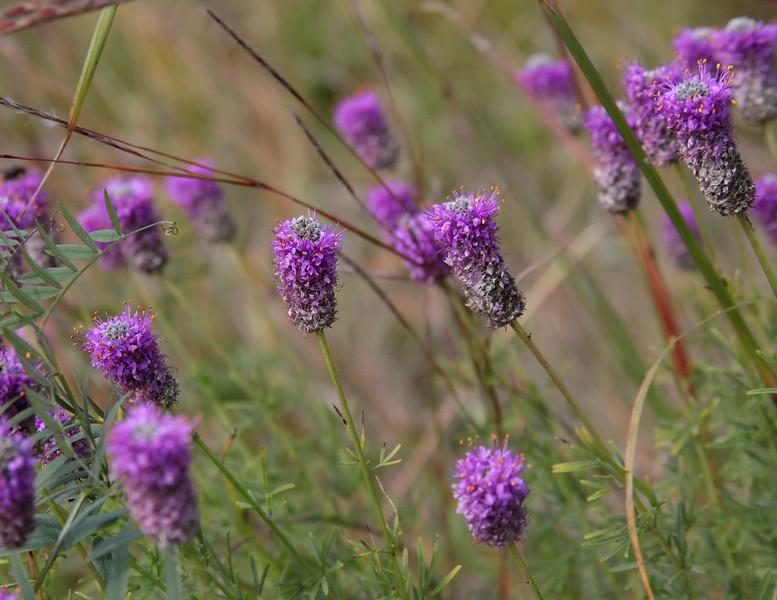 7JUL_9548_edit_littleflowers