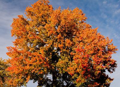 A Kingston Fall