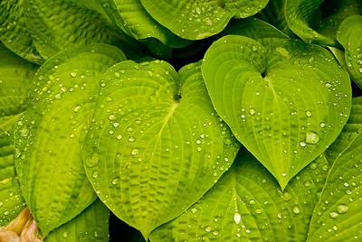 Wet Leafy Salad