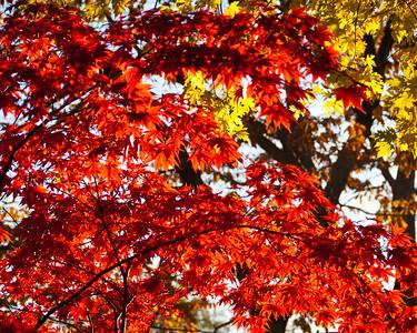 The Glow of Fall