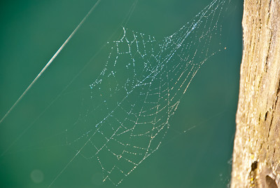 A Spider's World Wide Web