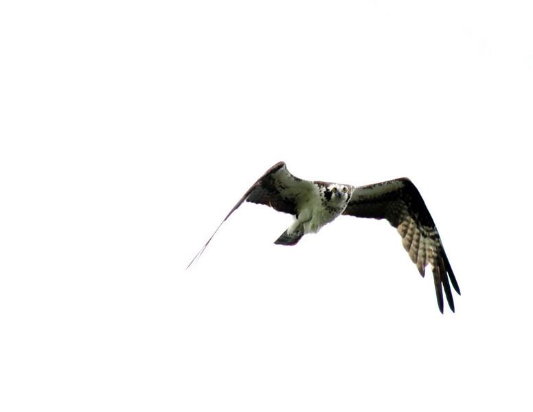 3_March_IMG_0082_Osprey_front_resize