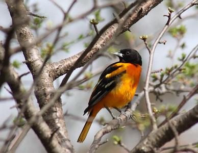 2015 Photo Calendar BIRDS