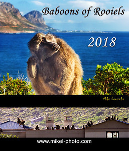 Baboon 2018 Cover